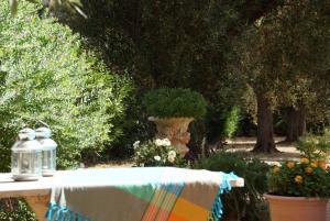Blick in den weitläufigen Olivengarten