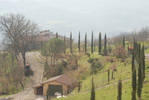 Cypress around the villa